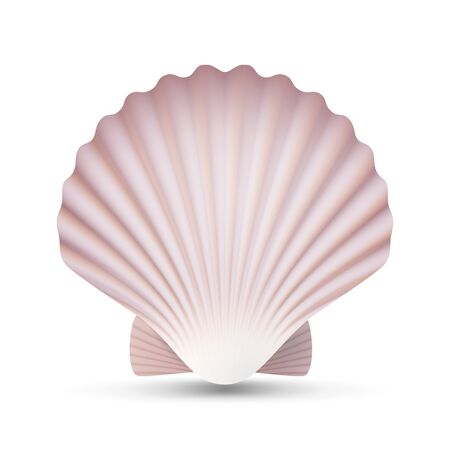oceanside: Scallop Seashell Vector. Ocean Mollusk Sea Shell Close Up. Isolated. Illustration
