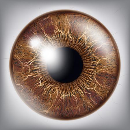 人間の目のアイリスのベクトル。3 D のリアルな眼球図  イラスト・ベクター素材