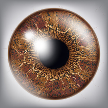 Human Eye Iris Vector. 3D Realistic Eyeball Illustration