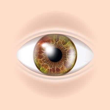 Vector de ojo humano. Ilustración de visión de detalle realista