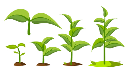 Saplings, Sprouts Growth Stages Drawings Set. Green Saplings Growing In Soil Isolated Cliparts Pack. Seedling, Cultivation. Agriculture, Horticulture. Greenery, Gardening Flat Illustration