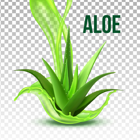 Realistic Foliage Green Plant Aloe Vera Vector. Medicinal Plant With Fresh Splash Juice On Transparency Grid Background. Constituent Of Cosmetology And Pharmacy Lotion Or Cream 3d Illustration
