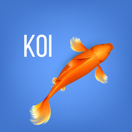 Asian Decorative Orange Koi Golden Fish Vector. Hanako Second Name Of Beauty Bright Orange Goldfish Symbolic Of Luck In Japanese Culture Swimming In Ponds And Lakes. Top View Illustration
