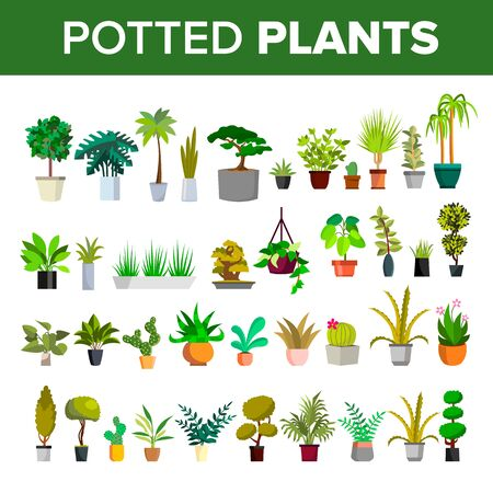 Floral Green Home Decorative Houseplant Set Vector. Different Collection Of Potted Plants Tree, Cactus And Flower, Blooming Houseplant. Exotic Botanical Nature Flat Cartoon Illustration