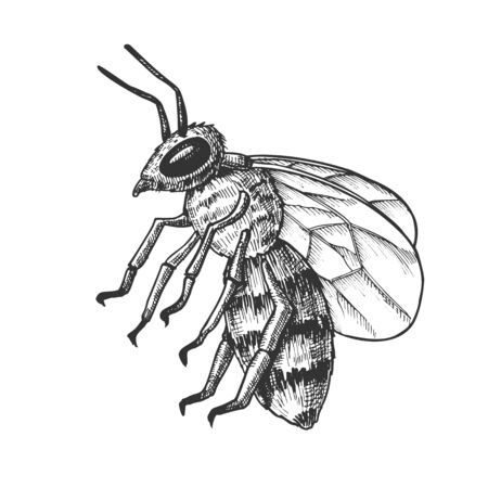 Striped Bee Flying Insect Animal Side View Vector. Bee Swarm Is Large Group Of Pollinators In Ecosystem And Important In Agriculture Sphere. Black And White Designed Cartoon Illustration