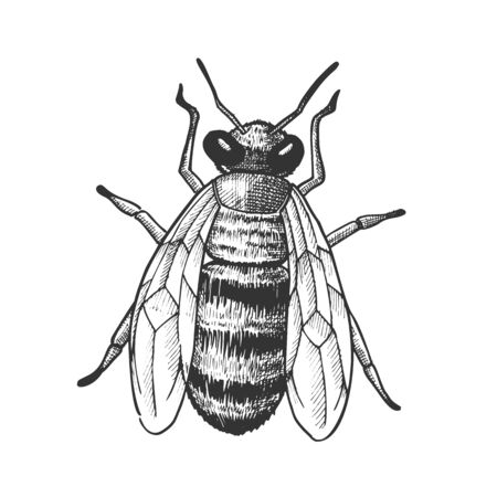 Striped Bee Flying Insect Animal Top View Vector. Bee With Two Pairs Of Wings, Paws And Antennae. Pollinates Flowering Plant And Produce Nourishing Flower Oil. Hand Drawn Cartoon Illustration