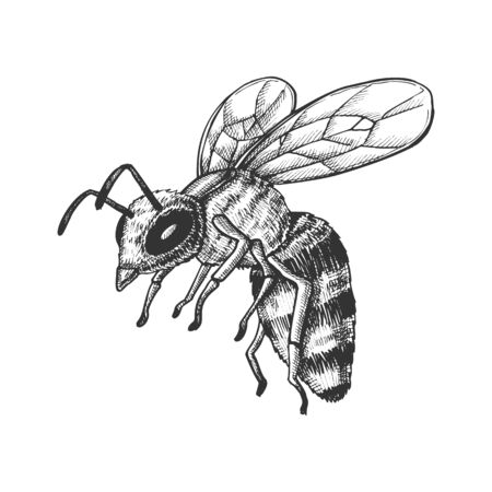Flying Honey Bee Insect Gathering Nectar Vector. Bee With Wing And Feeler. Fly Animal Honeybee Nature Pollinates Flower And Tree For Better Plant. Monochrome Designed Cartoon illustration