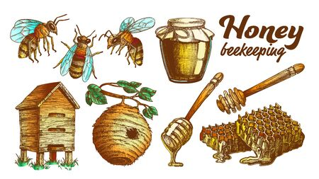 Collection Honey Beekeeping Apiary Set Vector. Glass Bottle And Slice Honeycomb, Wooden Hive And Wild On Branch Beehive House, Honey Dipping Stick And Bee. Color Designed Illustrations