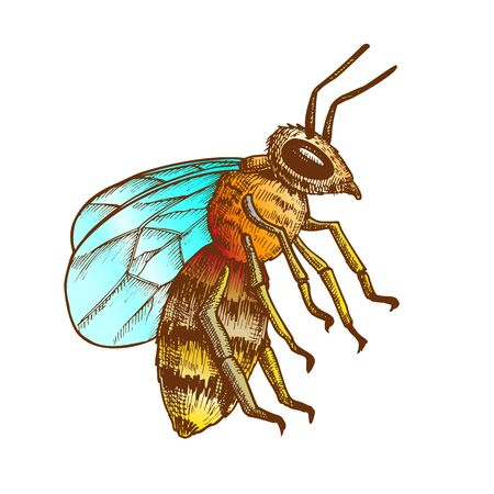 Striped Bee Flying Insect Animal Side View Vector. Bee Swarm Is Large Group Of Pollinators In Ecosystem And Important In Agriculture Sphere. Color Illustration Ilustração