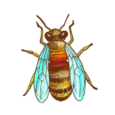 Striped Bee Flying Insect Animal Top View Vector. Bee With Two Pairs Of Wings, Paws And Antennae. Pollinates Flowering Plant And Produce Nourishing Flower Oil. Hand Drawn Color Illustration Ilustração