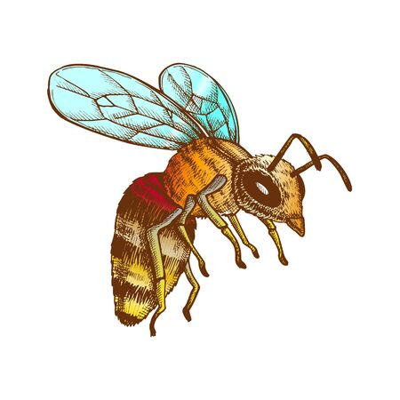 Flying Honey Bee Insect Gathering Nectar Vector. Bee With Wing And Feeler. Fly Animal Honeybee Nature Pollinates Flower And Tree For Better Plant. Color illustration