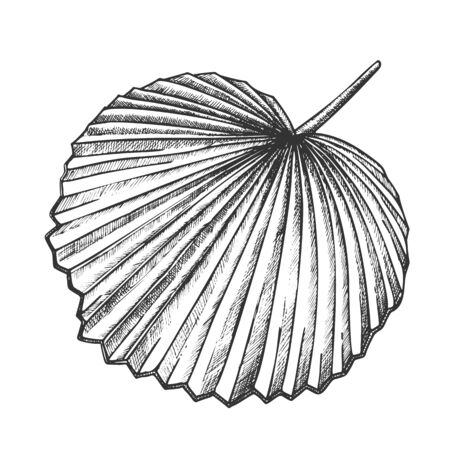 Licuala Grandis Tropical Exotic Leaf Retro Vector. Native To Lowland Rainforests Leaf. Element Of Beautiful Nature Botanical Herb Designed In Vintage Style Black And White Illustration