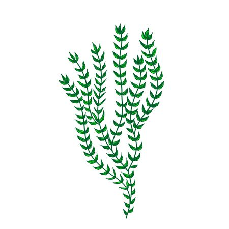 Decorative Sea Algae Seaweed Hand Drawn . Algae Underwater Nature Leaf Branch Plant, Marine Creature, Ocean Flora And Fauna Concept. Designed In Retro Style Template Black And White Illustration 版權商用圖片