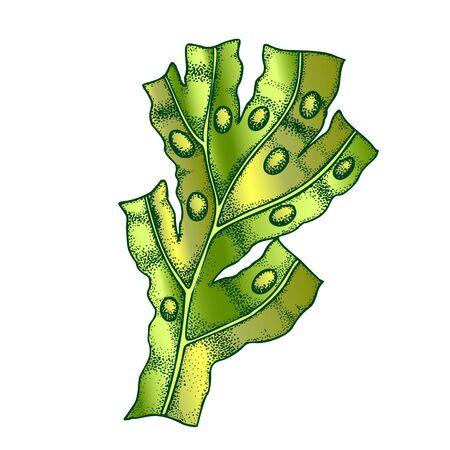 Decorative Algae Seaweed Coral Vintage . Algae Underwater Aquarium Decoration Plant, Marine Creature, Sea Or Ocean Flora And Fauna Concept. Designed Template Black And White Illustration