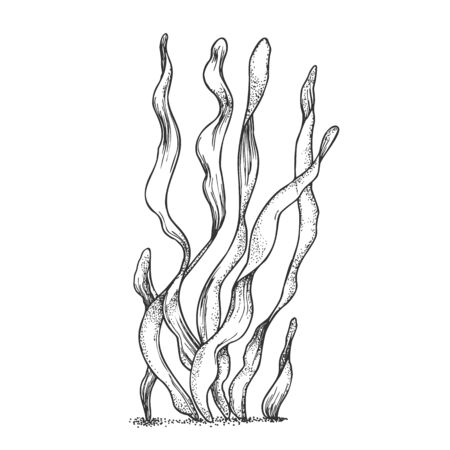 Underwater Organism Algae Seaweed Doodle . Algae Organic Leaf Branch Exotic Spirulina Plant Ornamental Aquarium Decoration Concept. Designed In Retro Style Mockup Monochrome Illustration 版權商用圖片