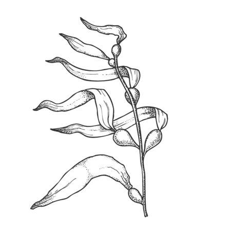 Underwater River Algae Seaweed Hand Drawn . Algae Nature Leaf Branch Plant, Aqua World Nature Flora And Fauna Concept. Designed In Vintage Style Mockup Monochrome Illustration 版權商用圖片