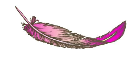 Color Lost Bird Outer Element Feather Hand Drawn Vector. Lying Fluffy Feather Considered Most Complex Integumentary Structures Found In Vertebrates. Designed In Vintage Style Illustration Ilustrace