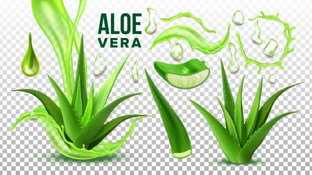 Pharmacy Succulent Aloe Vera Elements Set . Realistic Medicinal Succulent Plant Leaves Cuttings And Juice Drops Elements Collection On Background. Realistic Illustration