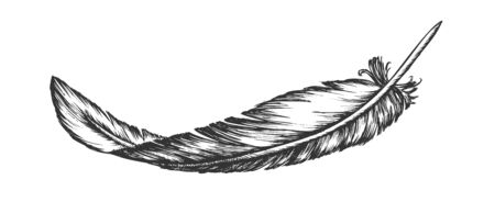 Lost Bird Outer Element Feather Hand Drawn . Lying Fluffy Feather Considered Most Complex Integumentary Structures Found In Vertebrates. Monochrome Designed In Vintage Style Illustration