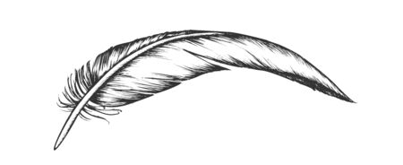 Lost Bird Outer Element Feather Vintage Vector. Fluffy Feather Characteristic Distinguish Extant Fliers From Other Living Groups. Varmint Detail Designed In Retro Style Monochrome Illustration