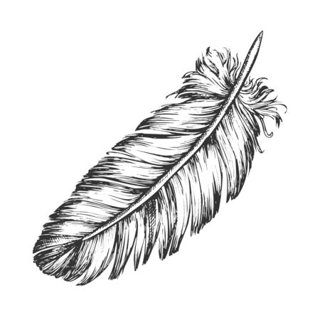 Lost Bird Outer Element Feather Sketch . Fluffy Feather Bird Detail Covering Varmint Body Arise From Certain Well-defined Tracts On Skin. Designed In Retro Style Monochrome Illustration
