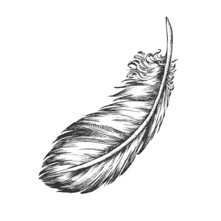 Lost Bird Outer Element Feather Monochrome Vector. Decorative Feather Flyer Detail Aid In Flight, Thermal Insulation And Waterproofing. Designed In Retro Style Black And White Illustration