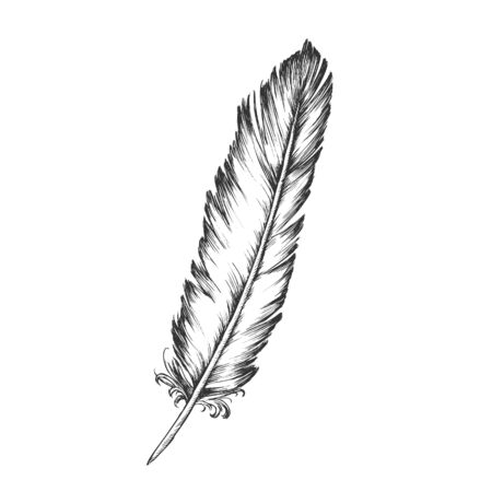 Decorative Bird Element Feather Monochrome Vector. Standing Feather Bird Detail Formed In Tiny Follicles In Epidermis Or Outer Skin Layer. Template Designed In Retro Style Black And White Illustration