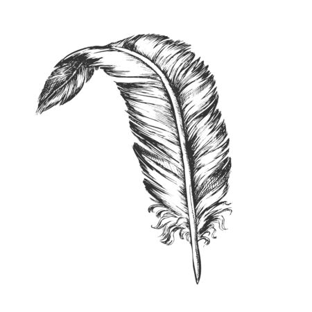 Decorative Bird Element Feather Vintage Vector. Standing Feather Cover Exterior Flyer Body Detail Writer Ancient Ink Tool. Template Designed In Retro Style Black And White Illustration Illusztráció