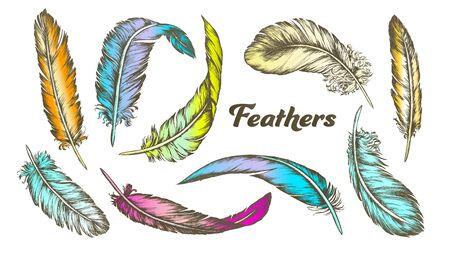 Color Different Feathers Set Ink . Standing, Flying And Lying Fluffy Bird Feathers. Epidermal Growths Form Distinctive Outer Covering Or Plumage. Hand Drawn Illustrations