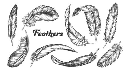 Collection of Different Feathers Set Ink . Standing, Flying And Lying Fluffy Bird Feathers. Epidermal Growths Form Distinctive Outer Covering Or Plumage. Monochrome Hand Drawn Illustrations Reklamní fotografie