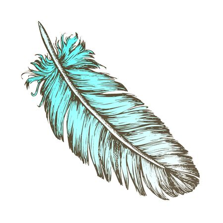 Color Lost Bird Outer Element Feather Sketch . Fluffy Feather Bird Detail Covering Varmint Body Arise From Certain Well-defined Tracts On Skin. Designed In Retro Style Illustration