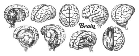Collection In Different Views Brain Set Vector. Many Kinds And Modification Of Cyber And Human Brain. Anatomy Medical Neurology Element Hand Drawn In Vintage Style Monochrome Illustrations