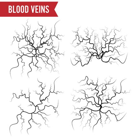 Human Blood Veins . Blood Arteries Isolated On White. Set Of Blood Veins. Image Of Health Red Veins