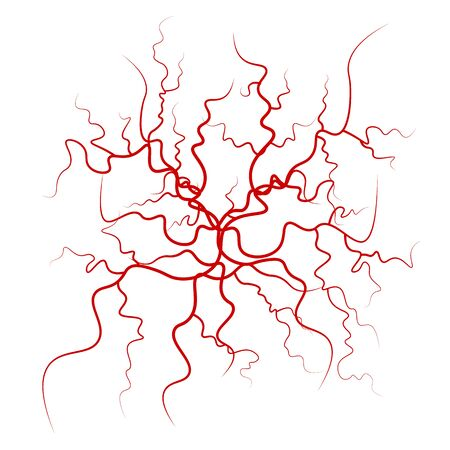 Human Blood Veins . Red Blood Vessels Design. Illustration Isolated On White