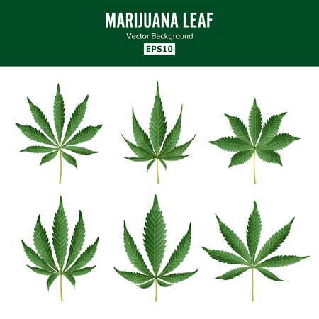 Marijuana Green Leaf . Medicinal Herbs Collection. Cannabis Sativa or Cannabis Indica Illustration Isolated On White Background. Graphic Design Element For Printables, Web, Prints