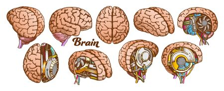 Color Brain Set Collection In Different Views Vector. Many Kinds And Modification Of Cyber And Human Brain. Anatomy Medical Neurology Element Hand Drawn In Vintage Style Illustrations