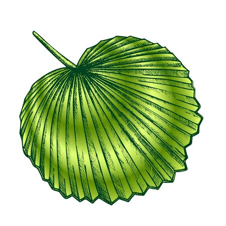 Licuala Grandis Tropical Exotic Leaf Retro Vector. Native To Lowland Rainforests Leaf. Element Of Beautiful Nature Botanical Herb Designed In Vintage Style Color Illustration