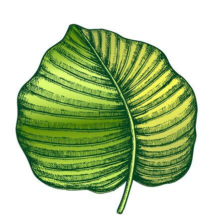 Anthurium Regale Tropical Leaf Hand Drawn Vector. Floral Frond Nils Leaf Of Evergreen Plant. Detail Of Beautiful Nature Botanical Herb Designed In Vintage Style Color Illustration
