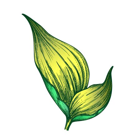 Rhapis Robusta Tropical Leaf Hand Drawn Vector. Decorative Jungle Floral Frond Leaf. Element Of Beautiful Nature Botanical Tree Herb Designed In Retro Style Color Illustration