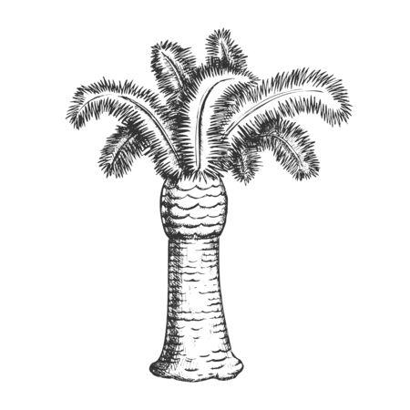 Palm Coastline Tropical Tree Monochrome Vector. Decorative Beautiful Trunk Palm. Paradise Wild Tropics Nature Botanical Plant Mockup Hand Drawn In Retro Style Black And White Illustration 向量圖像