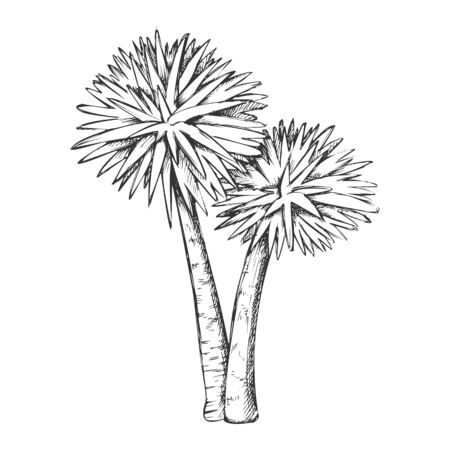 Sabal Palm Exotic Tropical Trees Monochrome Vector. Seashore Large Palm Cocos Nucifera. Warm Climate Wild Nature Botany Coco Plant Layout Designed In Retro Style Black And White Illustration