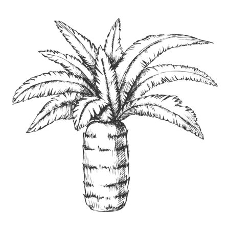 Pineapple Palm Tropical Tree Monochrome Vector. Canary Island Jungle Flowering Palm Trunk Leaf Plant. Nature Botany Template Hand Drawn In Vintage Style Black And White Illustration