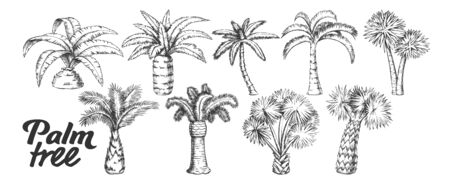 Palm High And Small Trunk Trees Set Ink Vector. Collection Of Different Decorative Foliage Palm. Wild Nature Botanical Plant Concept Template Designed In Vintage Style Black And White Illustrations