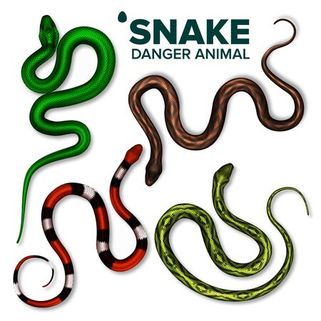 Snake Collection Of Wild Danger Animal Set Vector Top View. Brightly Multicolored Skin Snake. Crawling Dangerous Venomous Viper. Deadly Tropical Serpent Wildlife Realistic 3d Illustrations