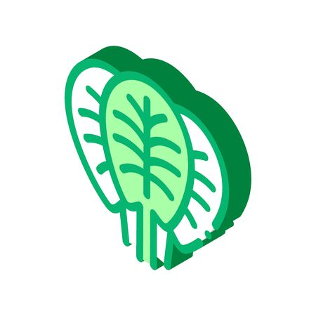 spinach leaves icon vector. isometric spinach leaves sign. color isolated symbol illustration