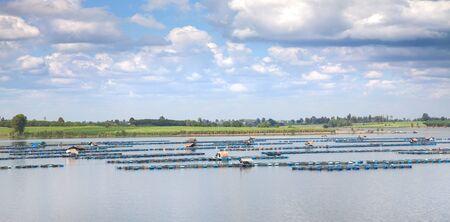 fish rearing: fish farming at the dam Thailand