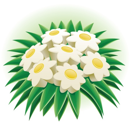3d mode: Bunch of daisy. 3d daisies vector illustration. Elements are layered separately in vector file. CMYK color mode.