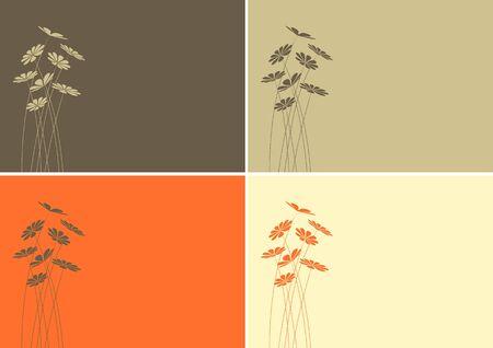 daisy vector: Daisy vector background set