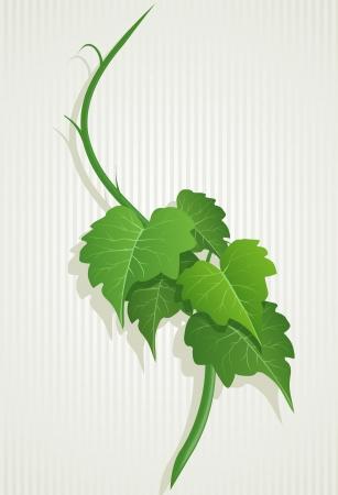 vine leaves: grape green leaves composition  Detailed illustration