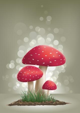 champignon magique: Fly Agaric champignons illustration. Illustration